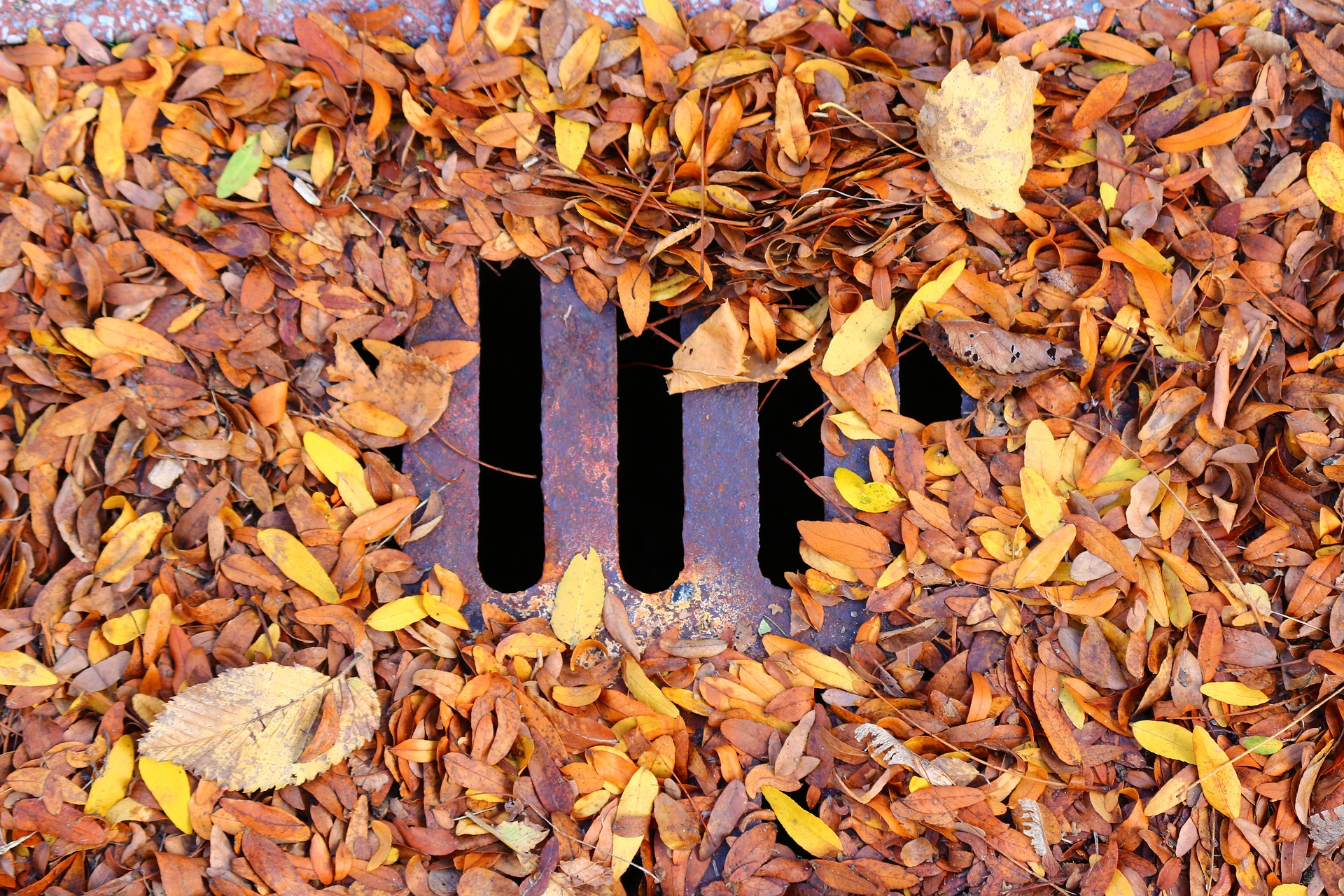 a drain covered in leaves that needs unblocking before winter