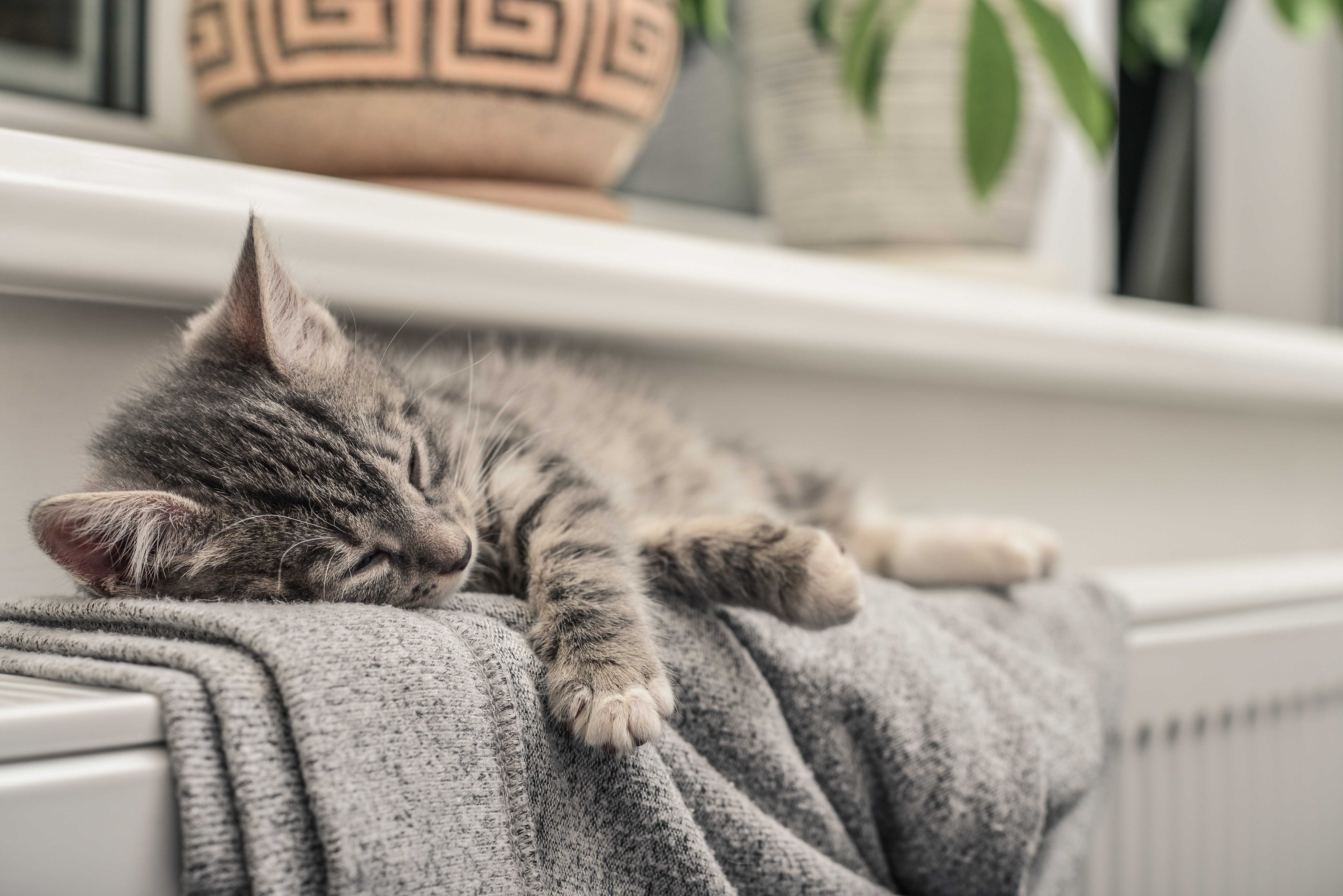 Kitten sleeping on a warm radiator