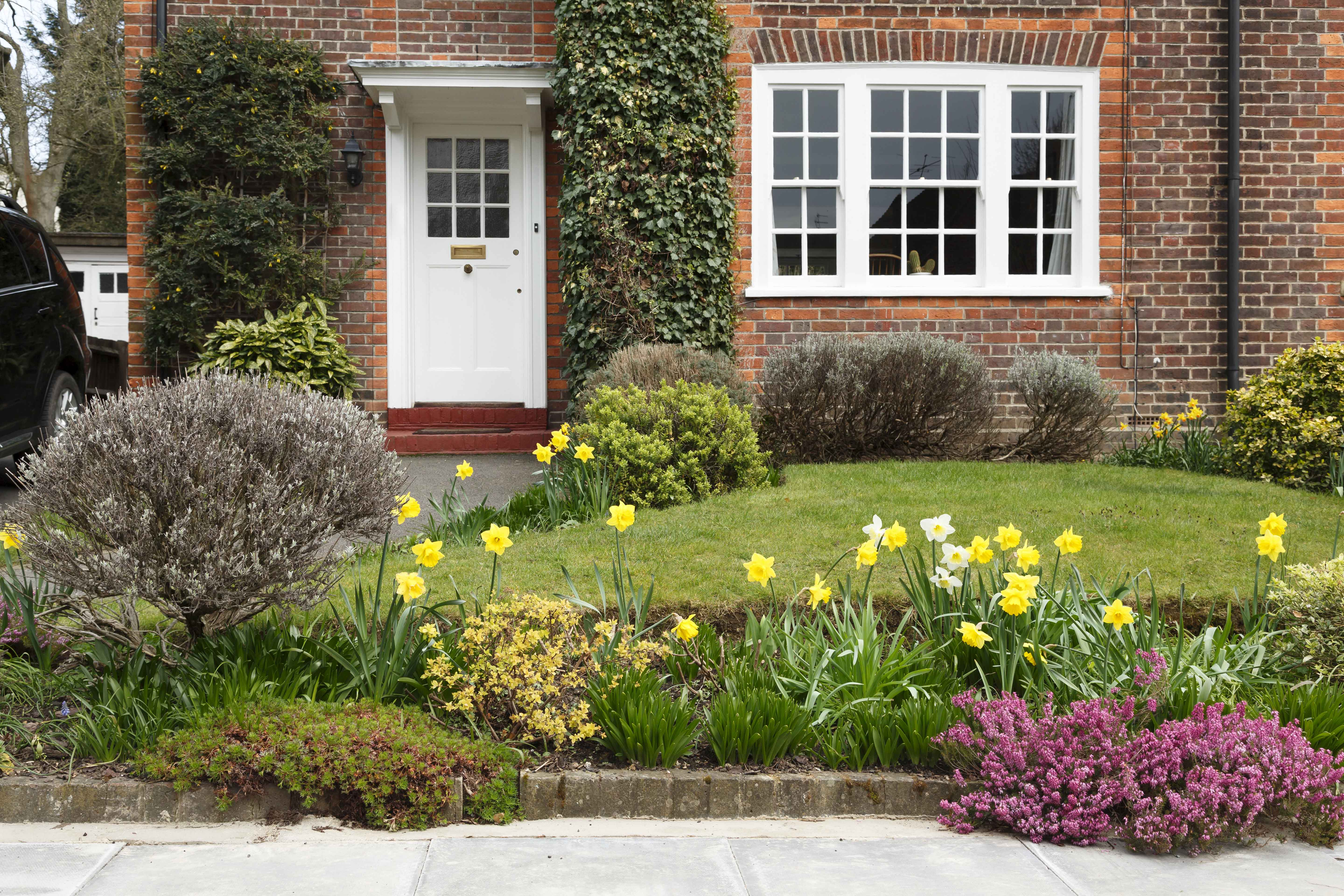 period house in cheltenham with a front garden planted with daffodil flowers